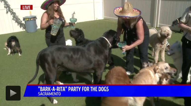 Bark-a-Rita Video